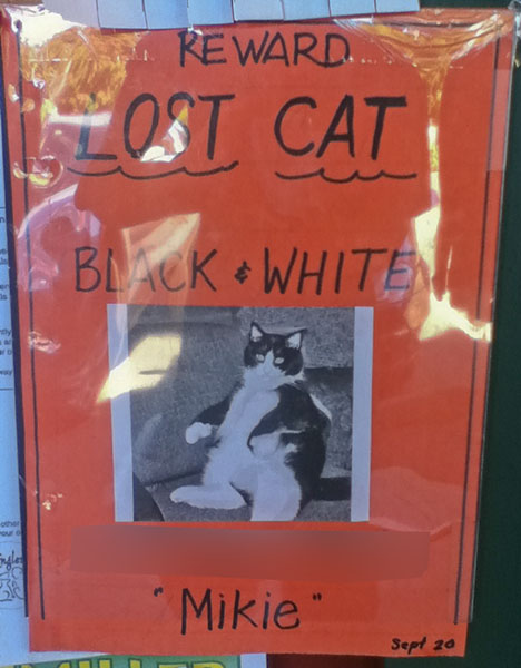 Lost Cat Poster- Mikie-2