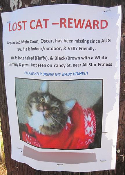 Lost Cat Poster- Oscar-2