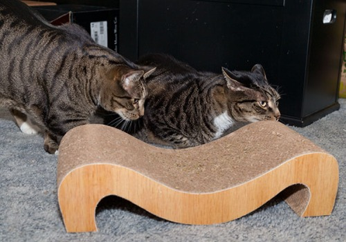 Oliver and Henry with mystery object