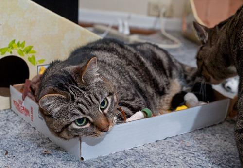 Otis in toy box