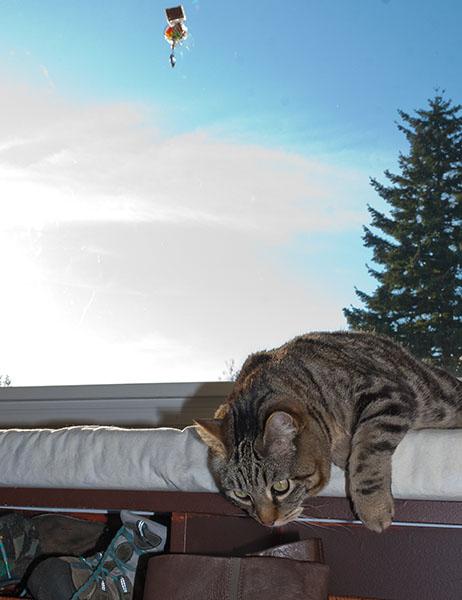 Otis watching shinies