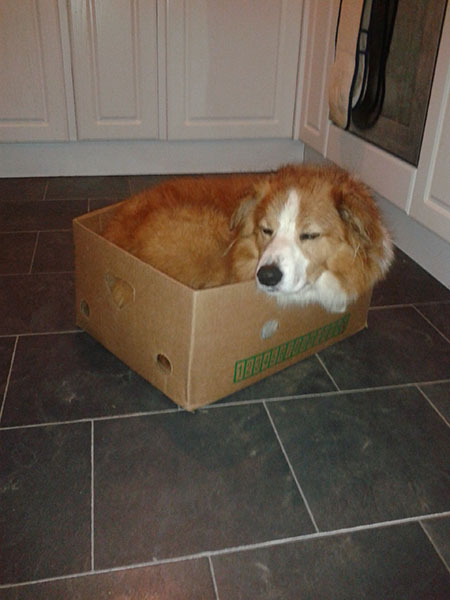 Bryn in box