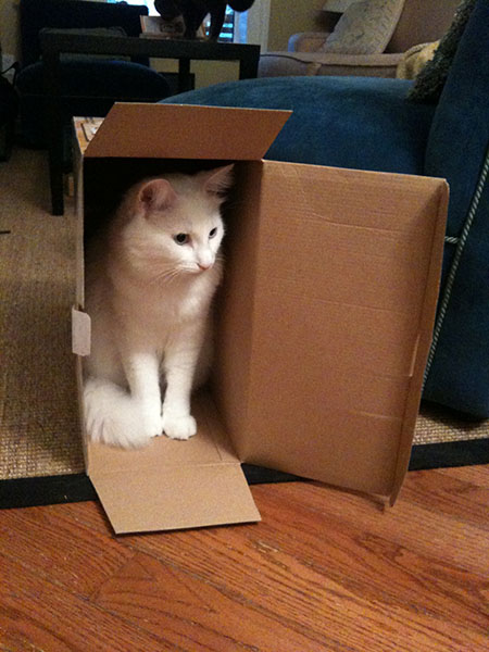 Casper in box