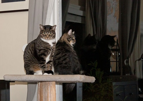 Henry and Thomas on cat tree
