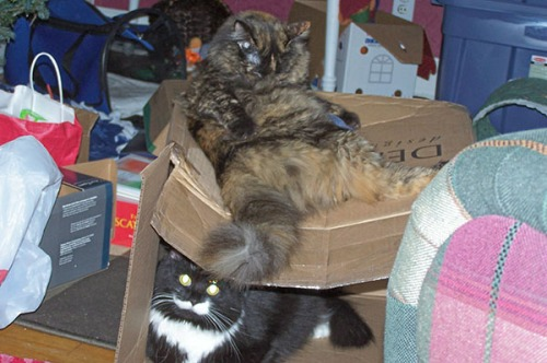 Double-decker Box Sit