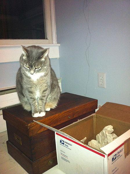 Murphy on box