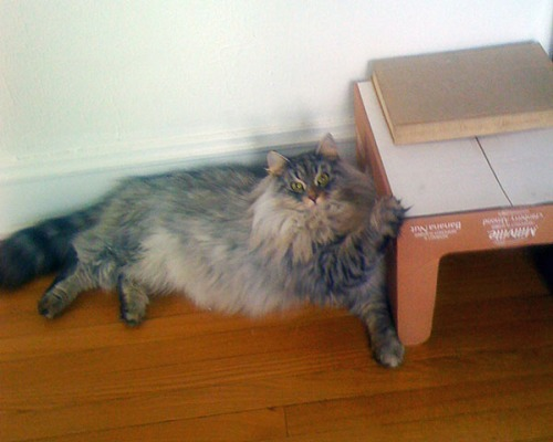 Ninjinsky Cat - This is My Box-