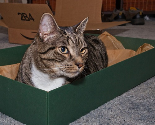 Oliver box loaf
