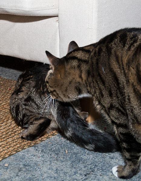 Oliver inspection 2