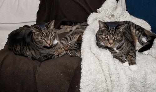 Oliver, Otis, Henry
