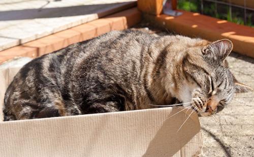 Otis blissed in box
