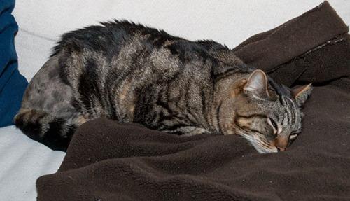 Otis happy on couch