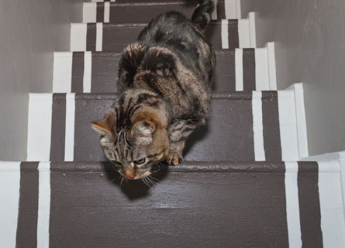 Otis demonstrates stair walking