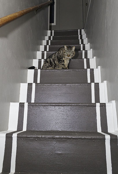 Otis on new stairs