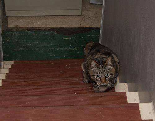 Otis on stairs