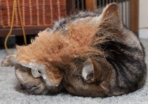 Otis snuggling squirrel