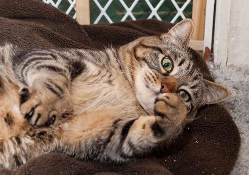 Otis, thumbs up