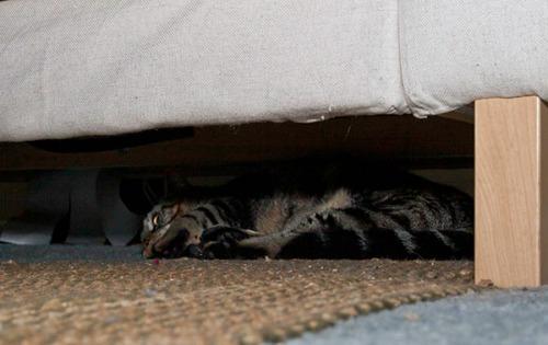 Otis under couch