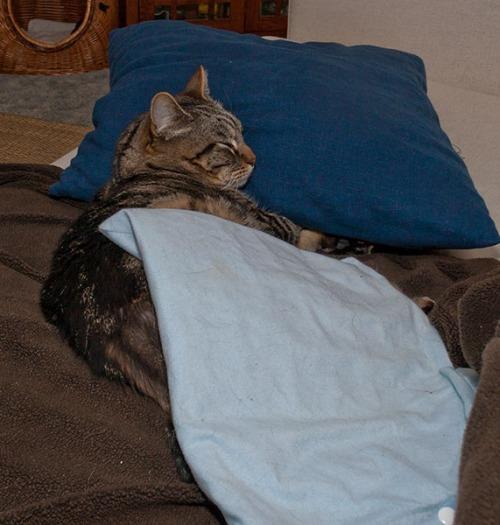 Otis under heating pad