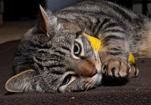 Otis with catnip banana 2
