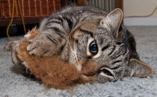 Otis with squirrel