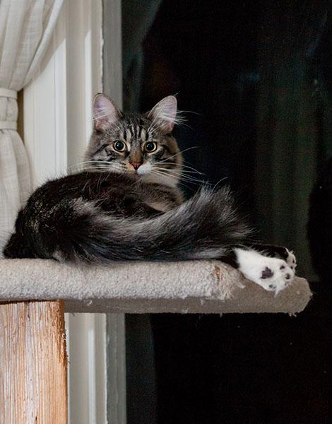 Thomas on cat tree