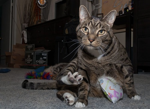 22- Oliver with toys
