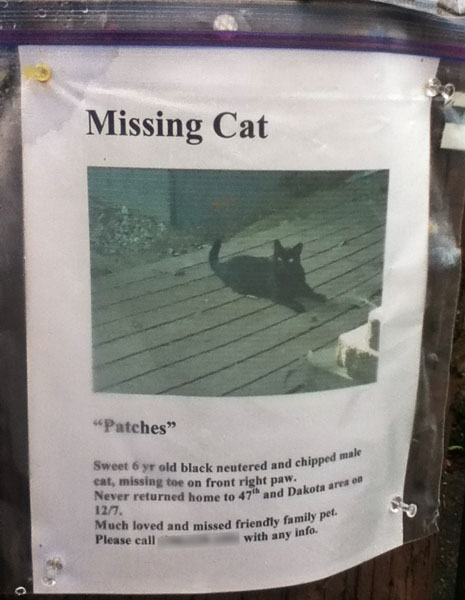 Lost Cat Poster- Patches