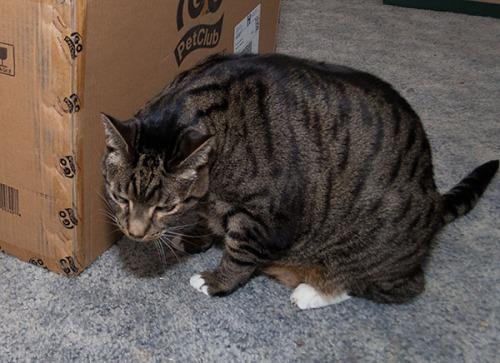 Oliver checking box 1