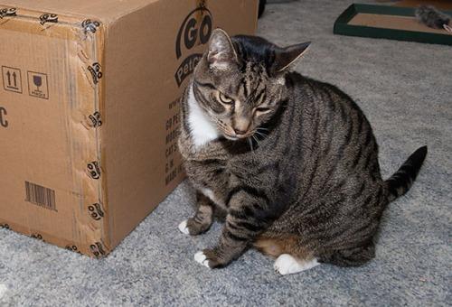 Oliver checking box 2