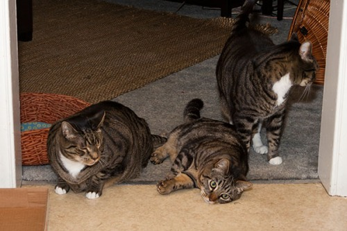 Oliver, Otis and Henry protective formation