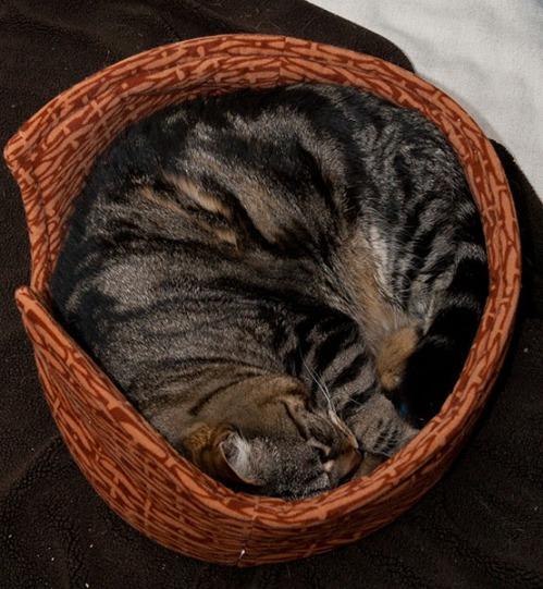 Otis circle bed