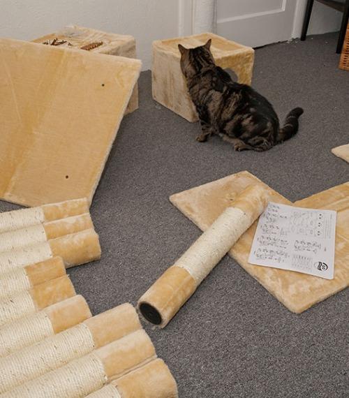 Otis investigating box contents