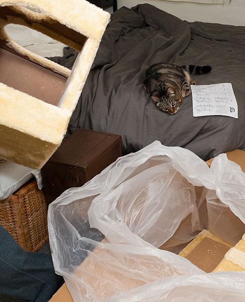 Otis watching unpacking
