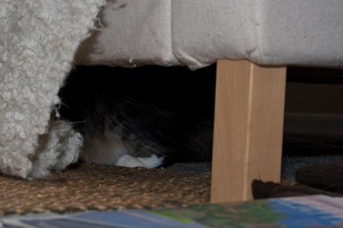 Thomas hiding in shadows