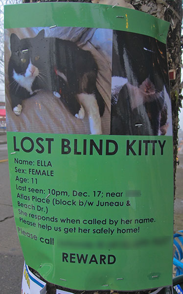 Lost Cat Poster- Blind Kitty-2