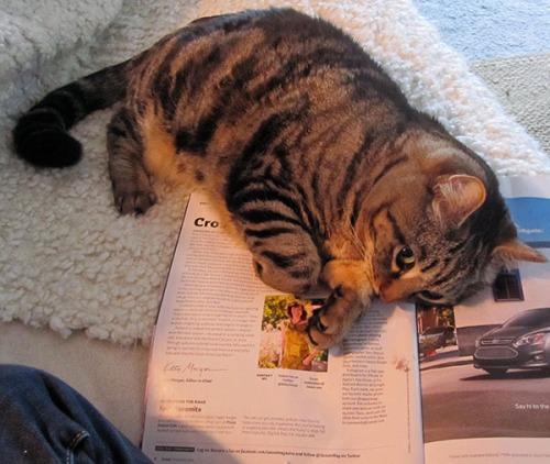 Otis laying on magazine