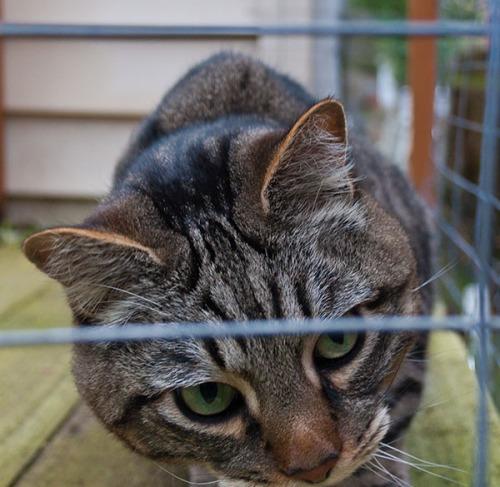 Otis looking  through wire