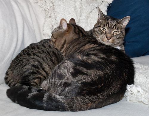 Otis using Oliver as pillow again