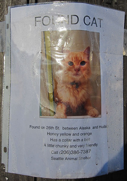 Found Cat Poster- Chunky and Friendly