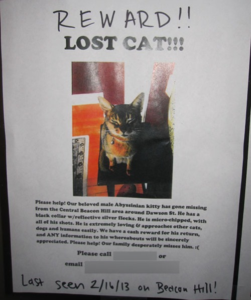 Lost Cat Poster- Abysinnian