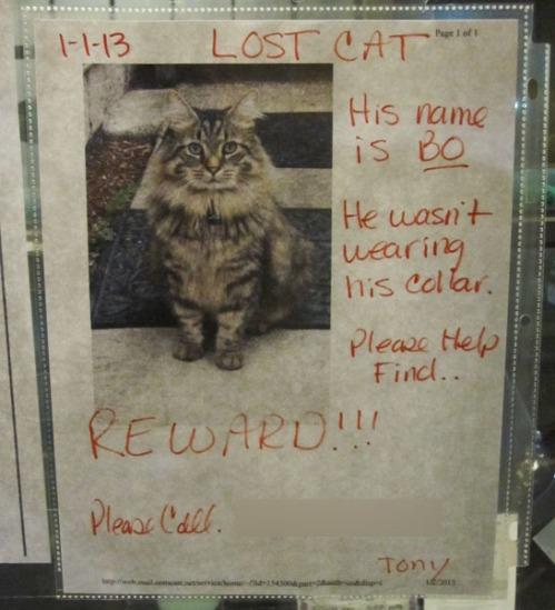 Lost Cat Poster- Bo