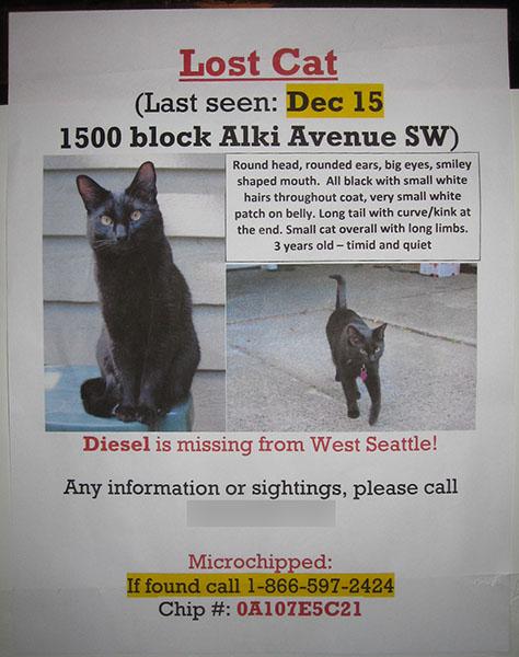 Lost Cat Poster- Diesel