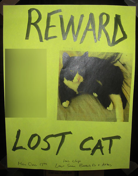 Lost Cat Poster- No Name