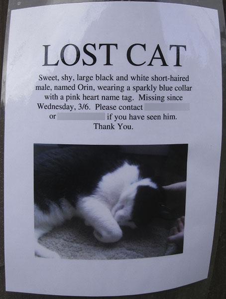 Lost Cat Poster- Orin