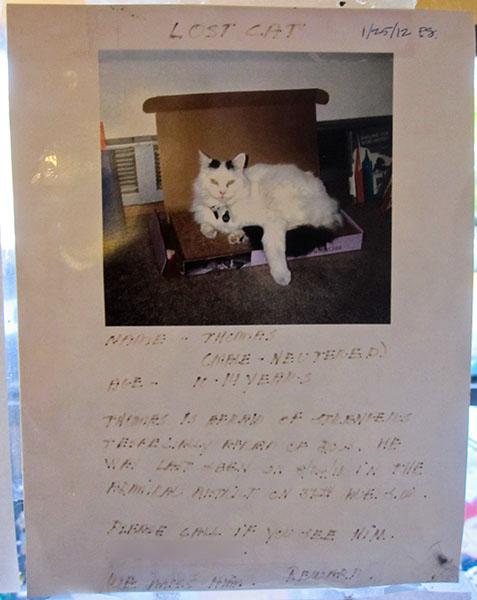 Lost Cat- Thomas