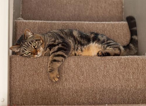 Otis bad stair day