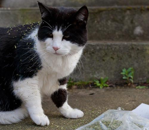 Stanley catnip thief 1