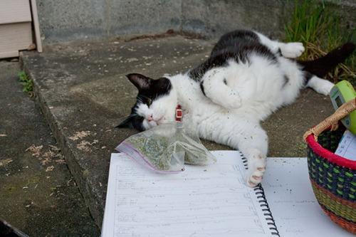 Stanley catnip thief 3