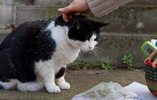 Stanley catnip thief 5